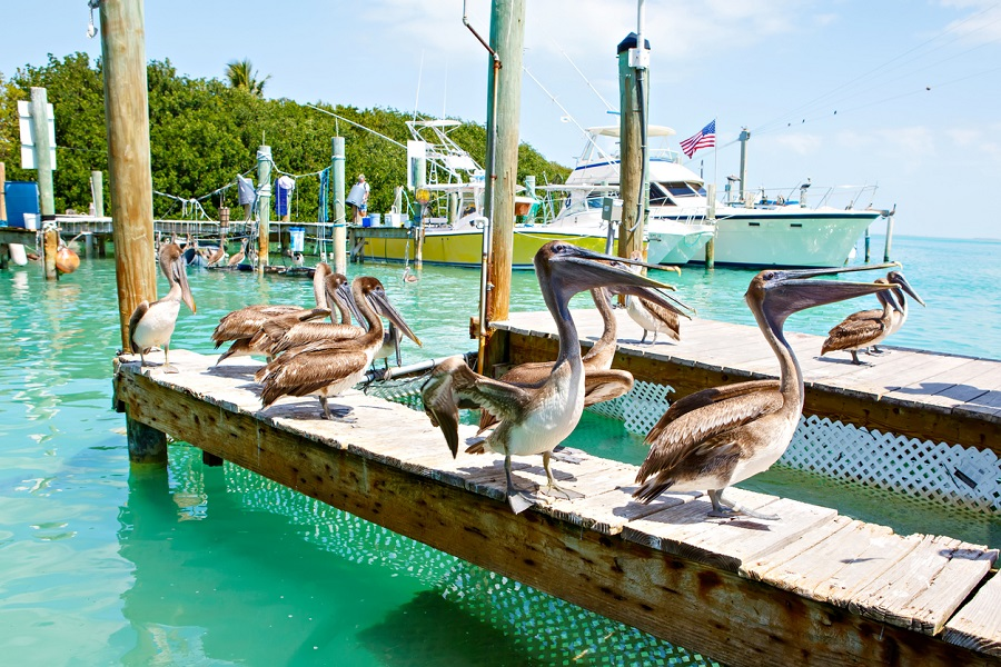Hit the water on Miami's best boat tours