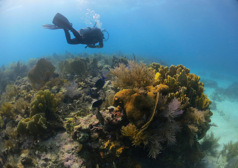 Traveling to Key West? Follow these Reef-Friendly Practices