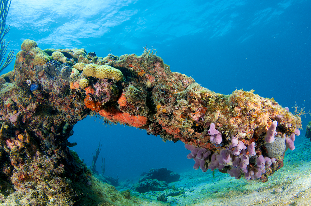 A Look at the Florida Coral Reef