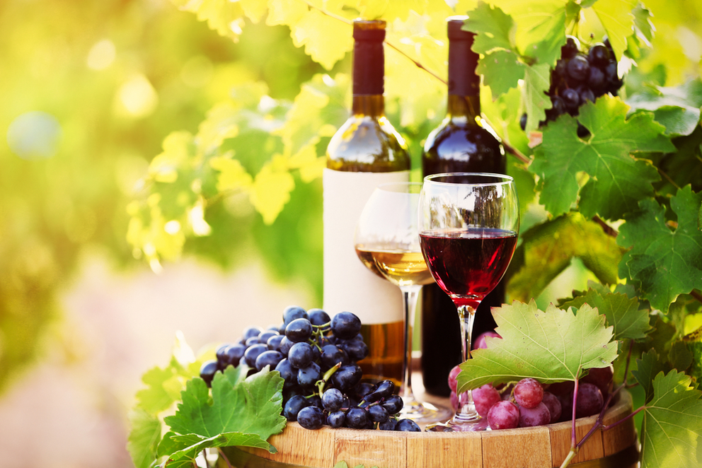 Long Island Wine Tours for Corporate Events