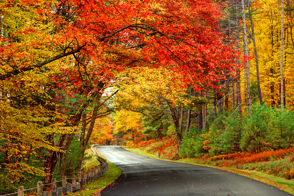 Where to See Fall Foliage near Long Beach, NY