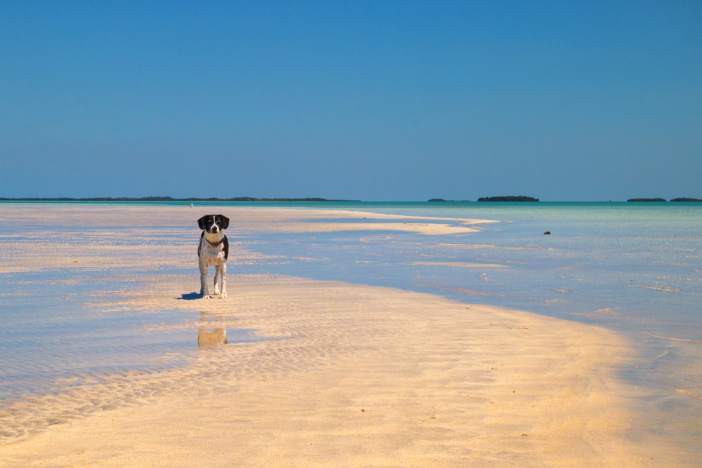 Best Places to Take Your Dog in Key West