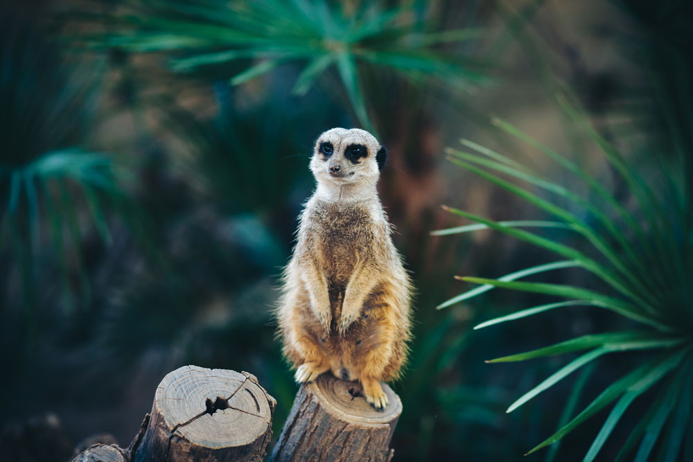 Get in Touch with Your Wild Side at the Barcelona Zoo