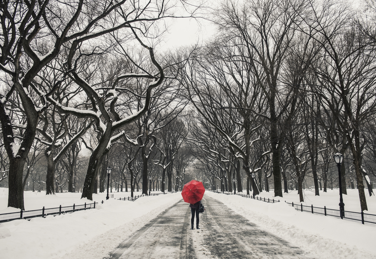 5 Ways to Weather Snow Days in NYC