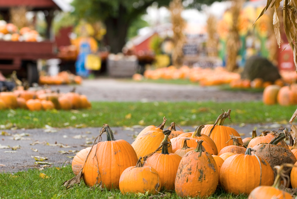 Best Fall Events in New York City