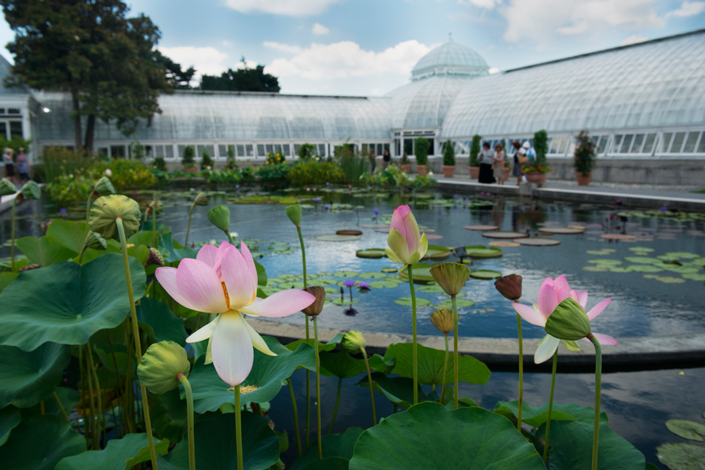 Upcoming events at the new york botanical garden - New york botanical garden tickets ...