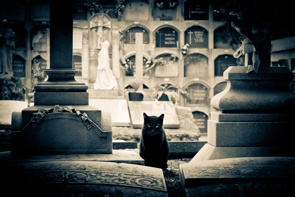 scary-cat-in-cemetery-halloween-in-nyc