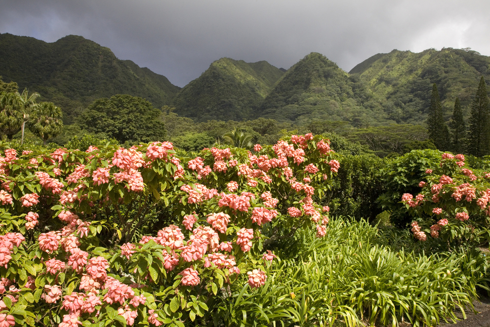 5 Reasons to Visit the Harold L. Lyon Arboretum in Oahu