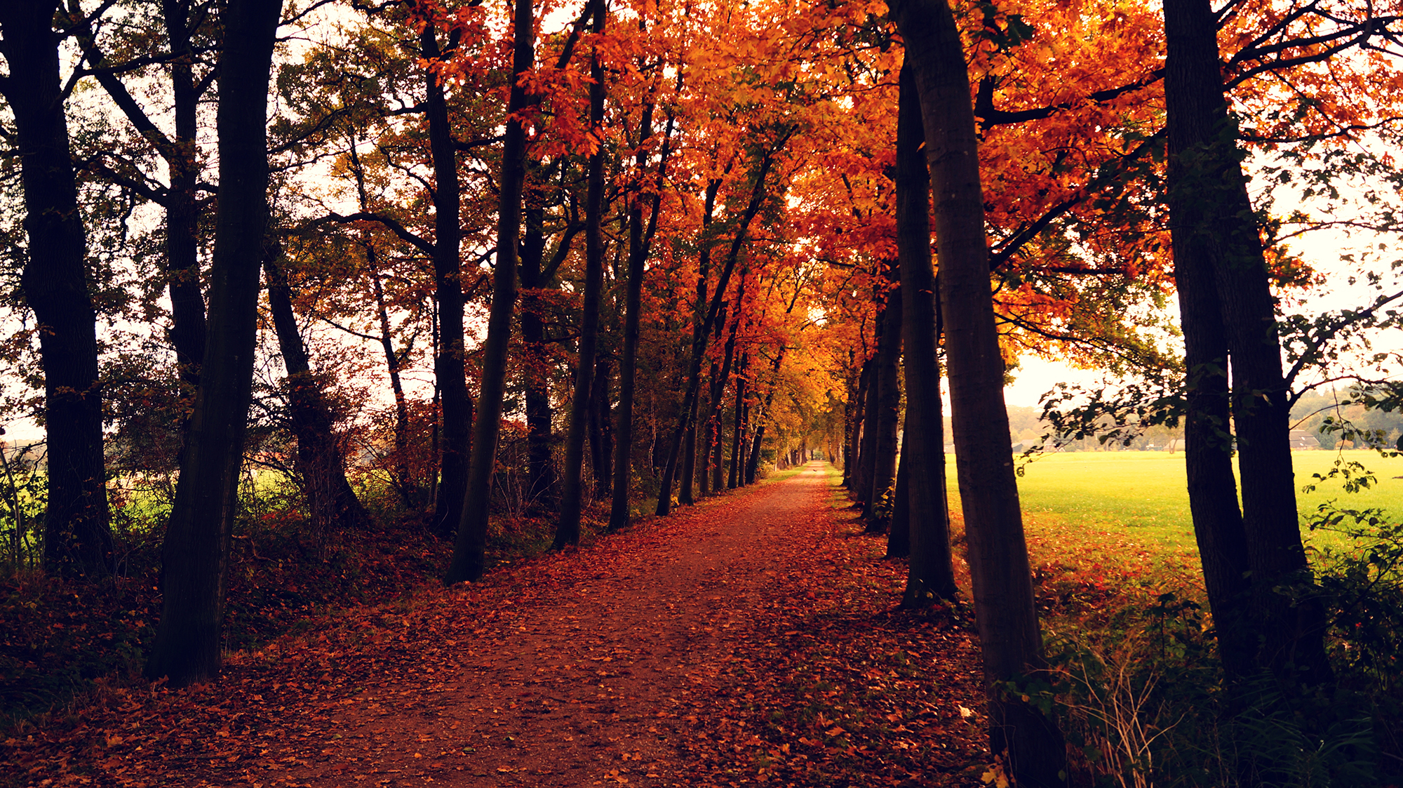 Things to do in Autumn in Milton Keynes