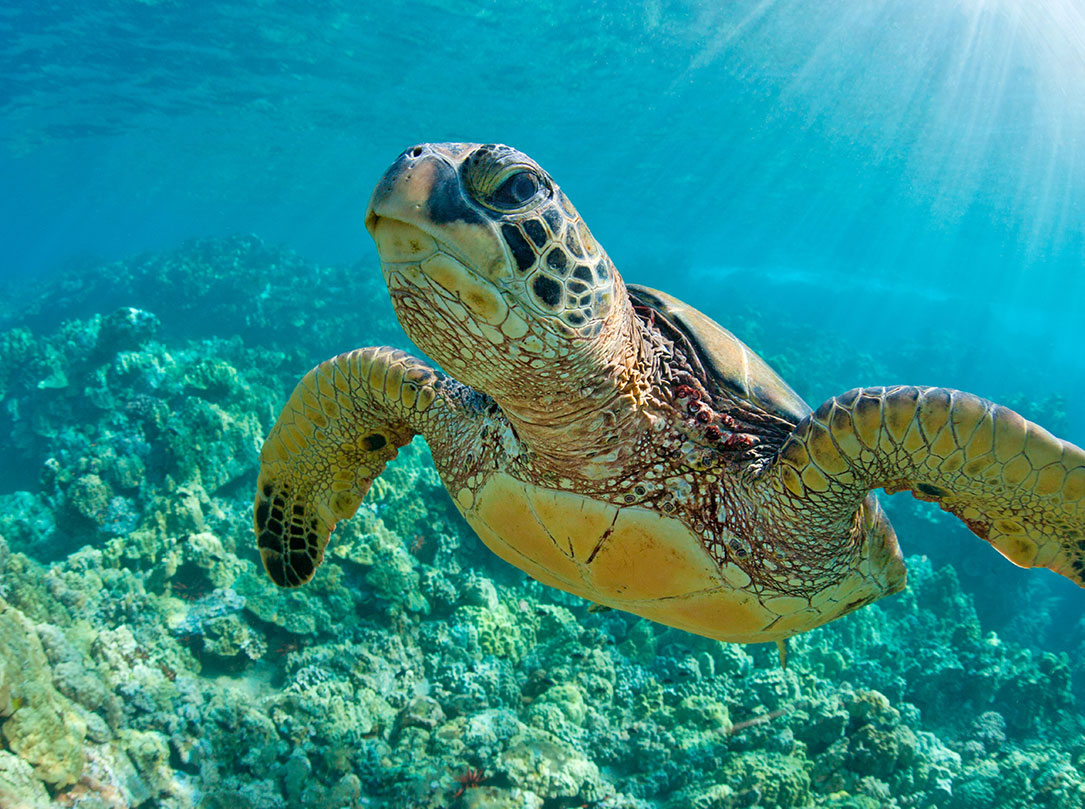 Closeup of turtle under water