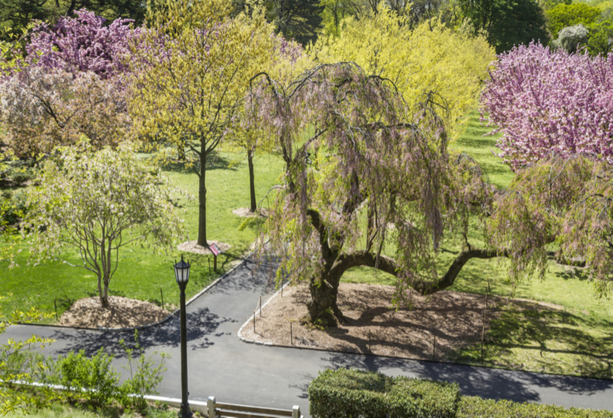 Image of the Brooklyn Botanical Garden