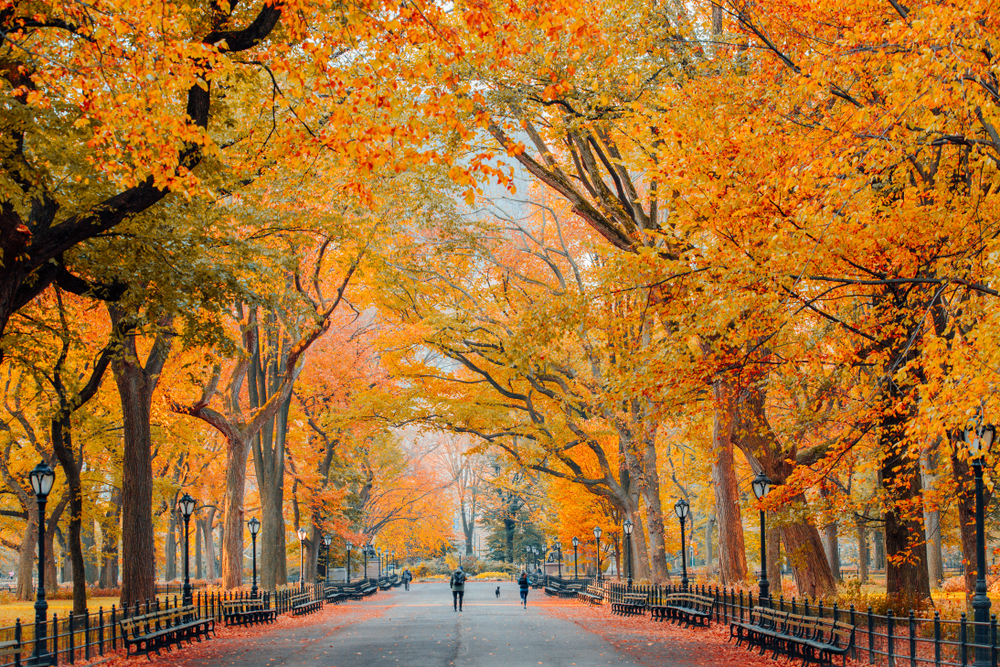 The Best Places to See Fall Foliage in Central Park blog image