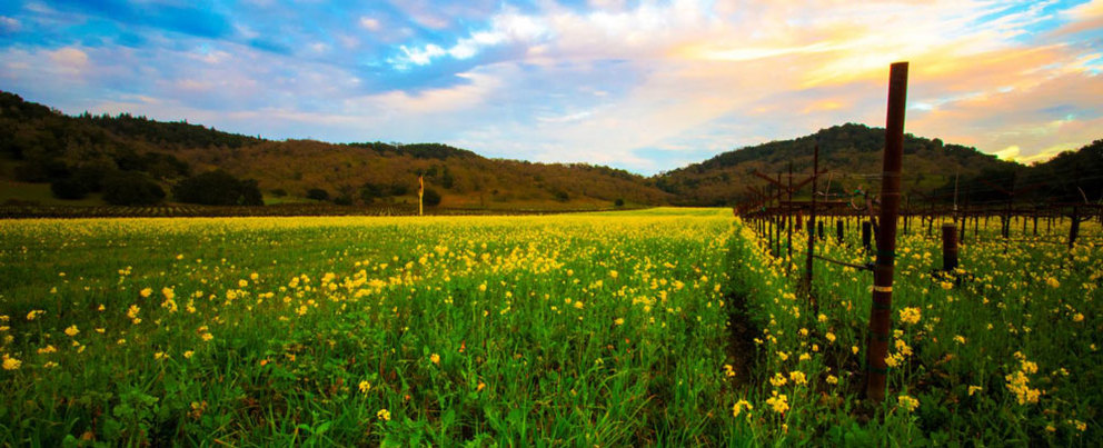 5 of the Best Spots for Napa Valley Hiking
