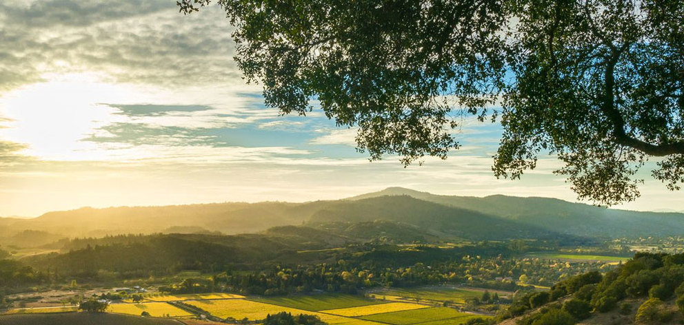 Your Ultimate Guide to the Best Napa Valley Scenic Views