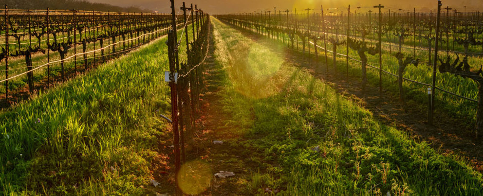 Your Ultimate Guide to Northern California Wine Country