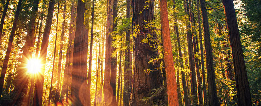 Northern California Redwoods: A Natural Wonder