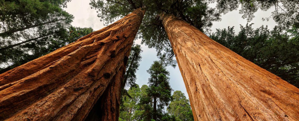 10 Amazing Things About The Redwood National Park