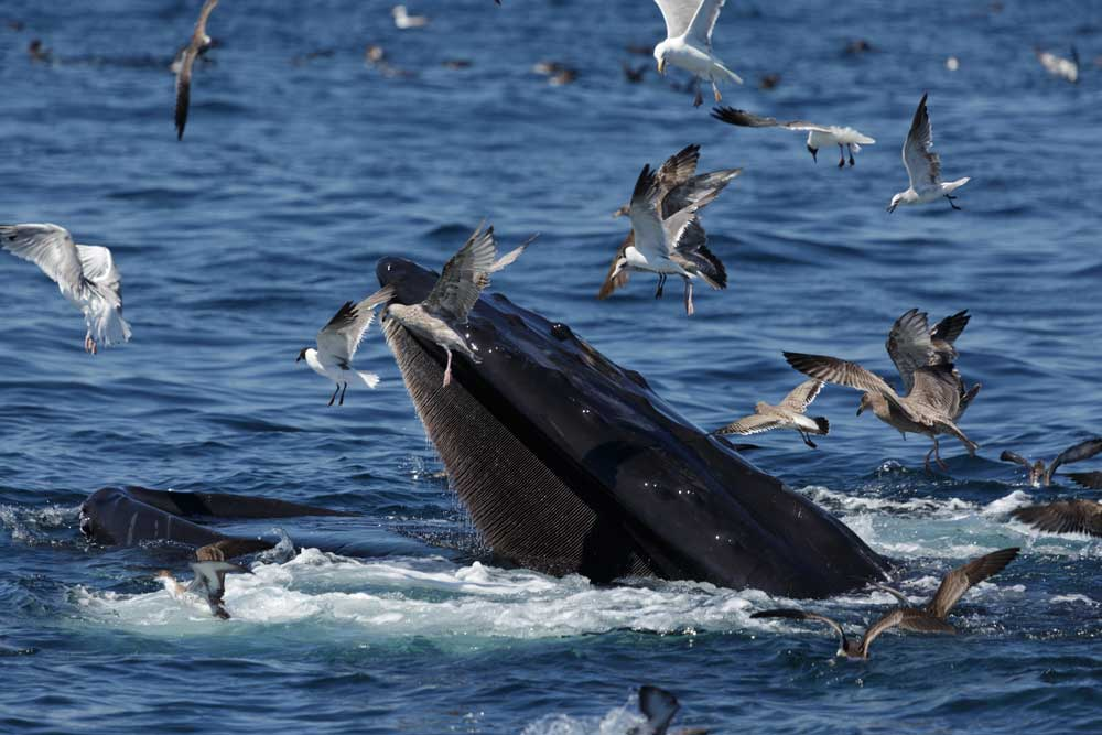what-you-will-see-on-your-boston-whale-watch