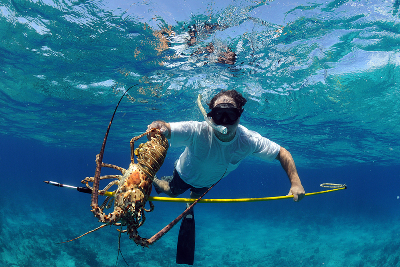 Key West Events – Mini-Lobster Season 2016