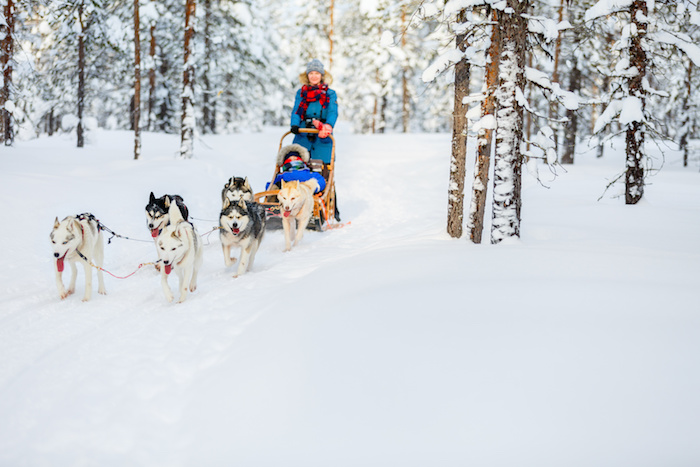 Artic Paws Dog Sled Tours