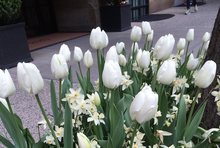 Spring Into Tribeca