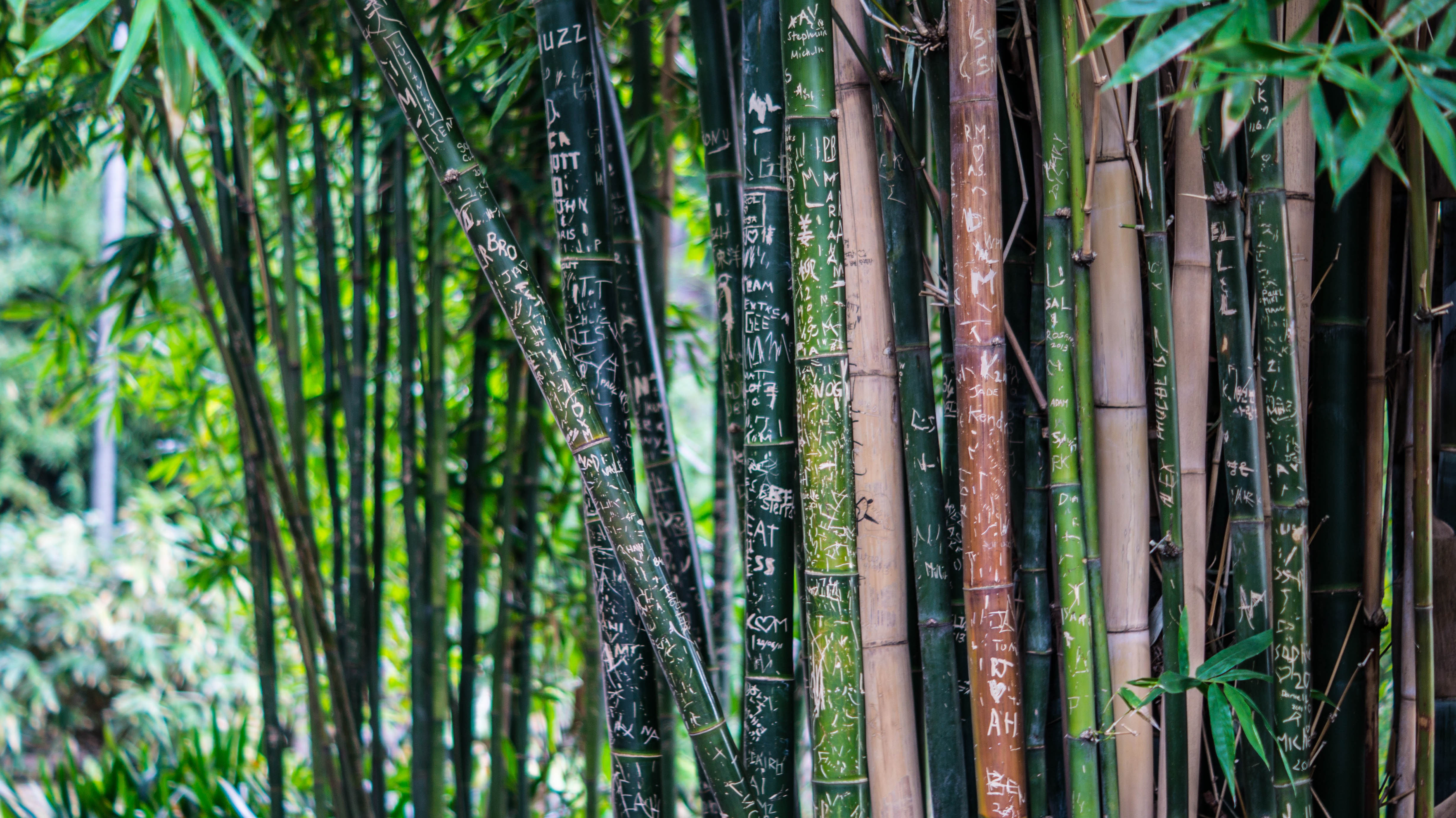Japanese Bamboo Art: The Abbey Collection