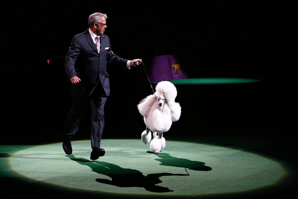 new-yorker-hotel-westminster-dog-show