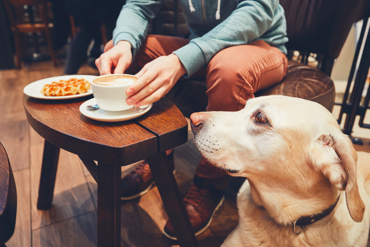 Where to take your pet in new york city for Dog friendly hotels nyc