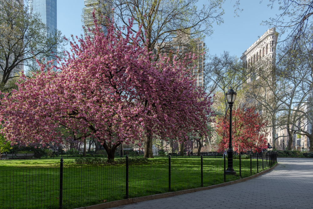 new-yorker-5-parks-in-manhattan-to-discover-this-summer-madison-square-park