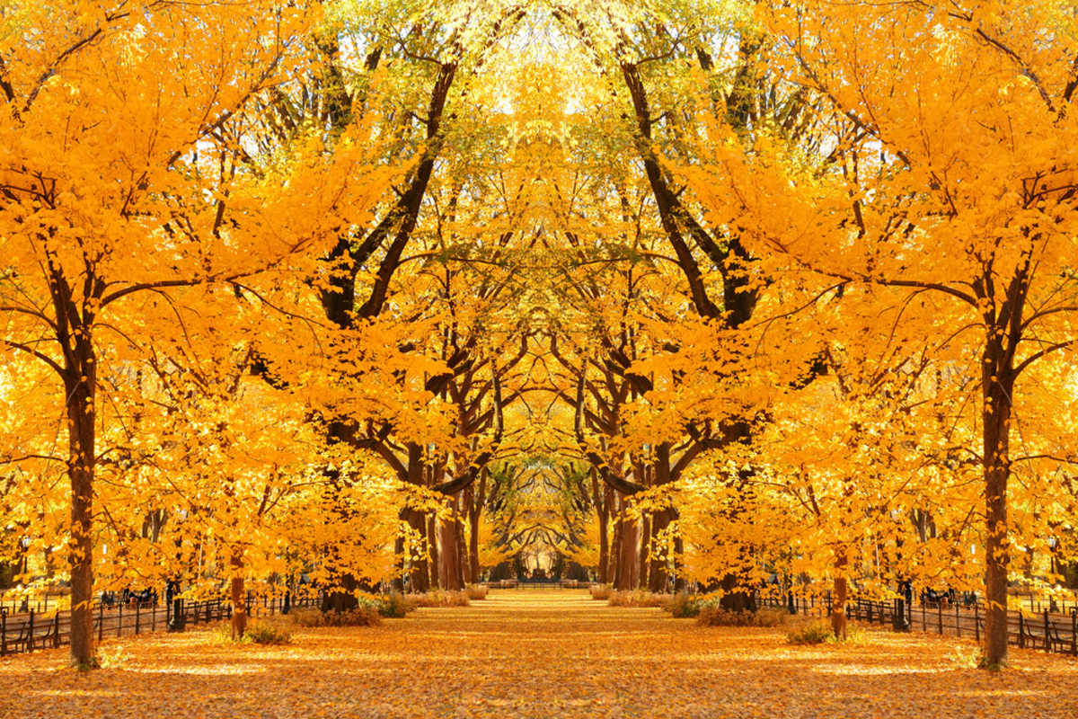 trees-in-the-mall-in-central-park-during-fall