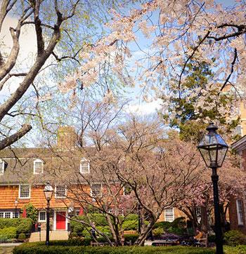30 Exterior Cherry Blossoms
