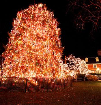 Palmer Square Christmas Tree