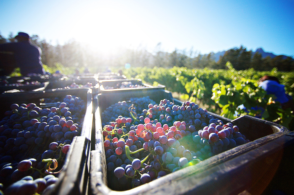 How to Celebrate Harvest Season in the Napa Valley