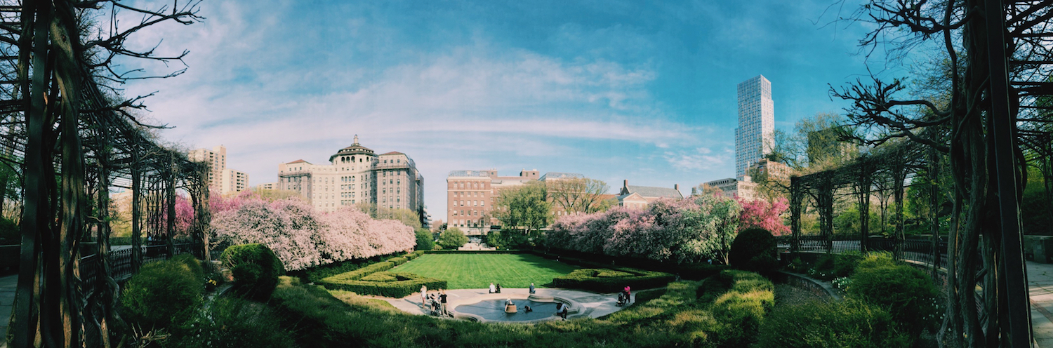 Where To See Spring Blooms In NYC
